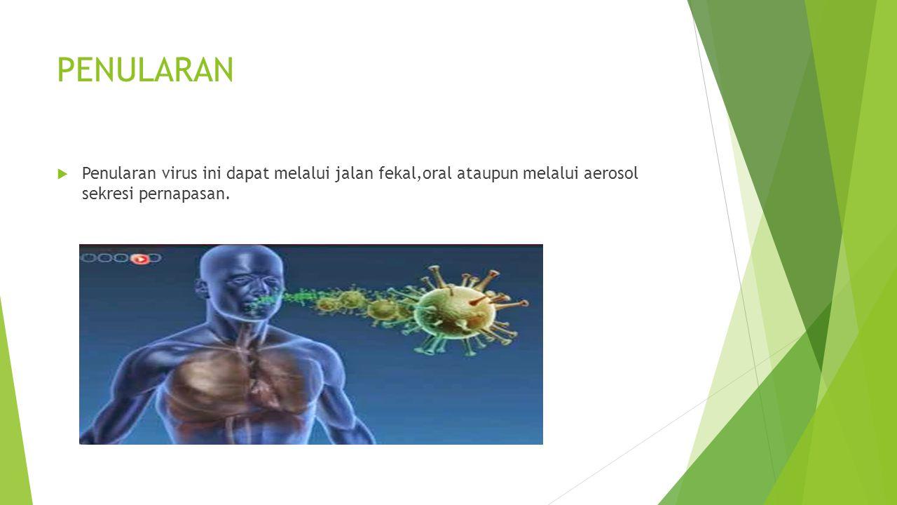 PENULARAN Penularan virus ini dapat melalui jalan fekal,oral ataupun melalui aerosol sekresi pernapasan.