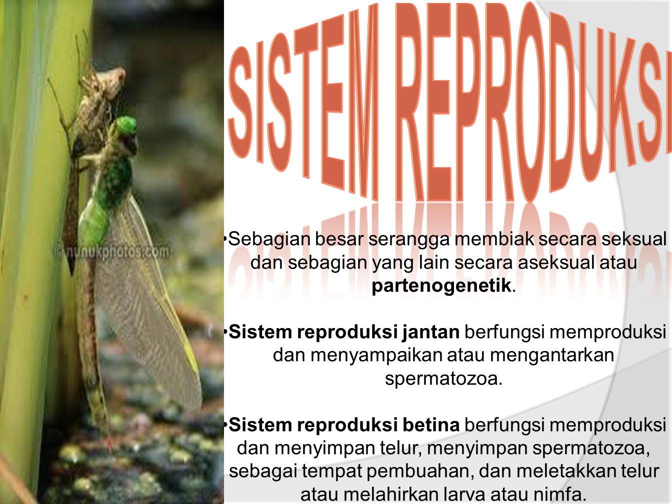 Sistem reproduksi Sebagian besar serangga membiak secara seksual dan sebagian yang lain secara aseksual atau partenogenetik.