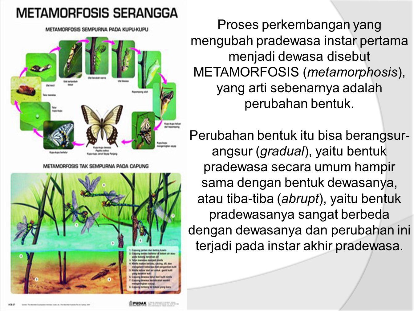 Proses perkembangan yang mengubah pradewasa instar pertama menjadi dewasa disebut METAMORFOSIS (metamorphosis), yang arti sebenarnya adalah perubahan bentuk.