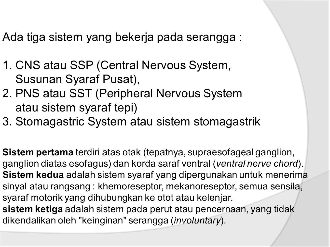 Ada tiga sistem yang bekerja pada serangga :