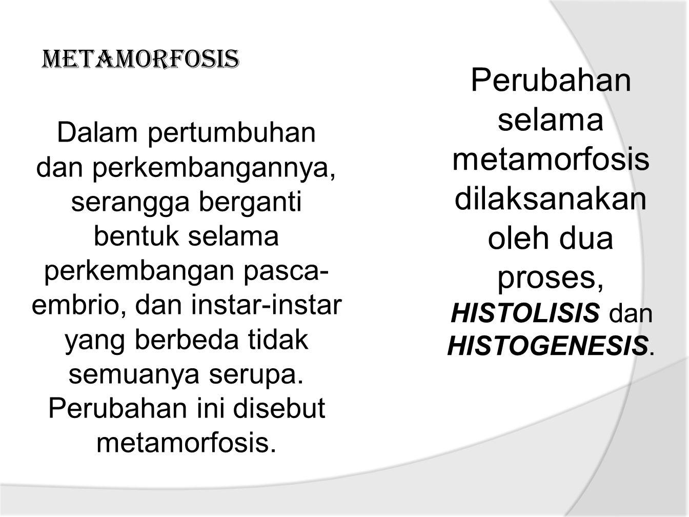 Perubahan selama metamorfosis dilaksanakan oleh dua proses, HISTOLISIS dan HISTOGENESIS.
