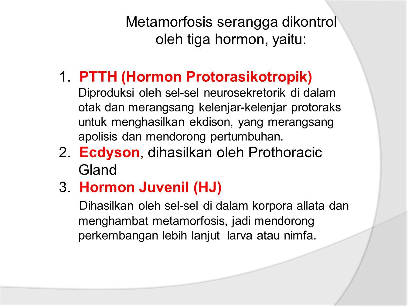 Metamorfosis serangga dikontrol oleh tiga hormon, yaitu: