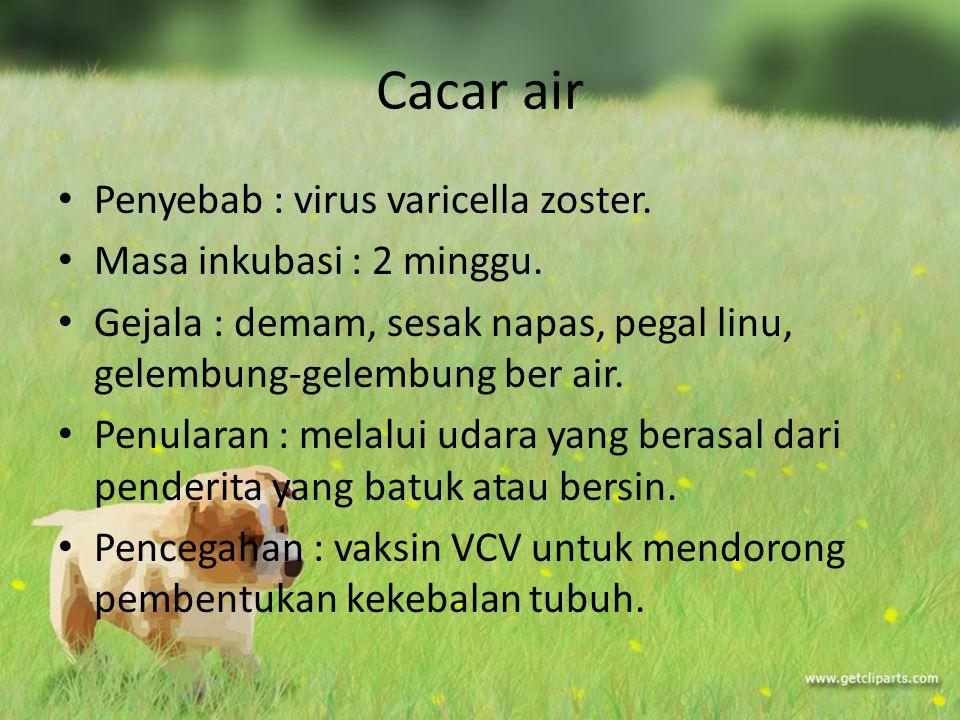 Cacar air Penyebab : virus varicella zoster. Masa inkubasi : 2 minggu.