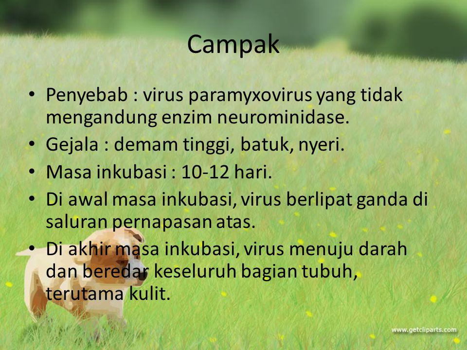 Campak Penyebab : virus paramyxovirus yang tidak mengandung enzim neurominidase. Gejala : demam tinggi, batuk, nyeri.