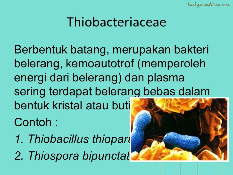 Thiobacteriaceae