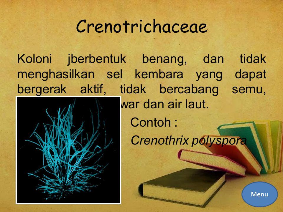 Crenotrichaceae