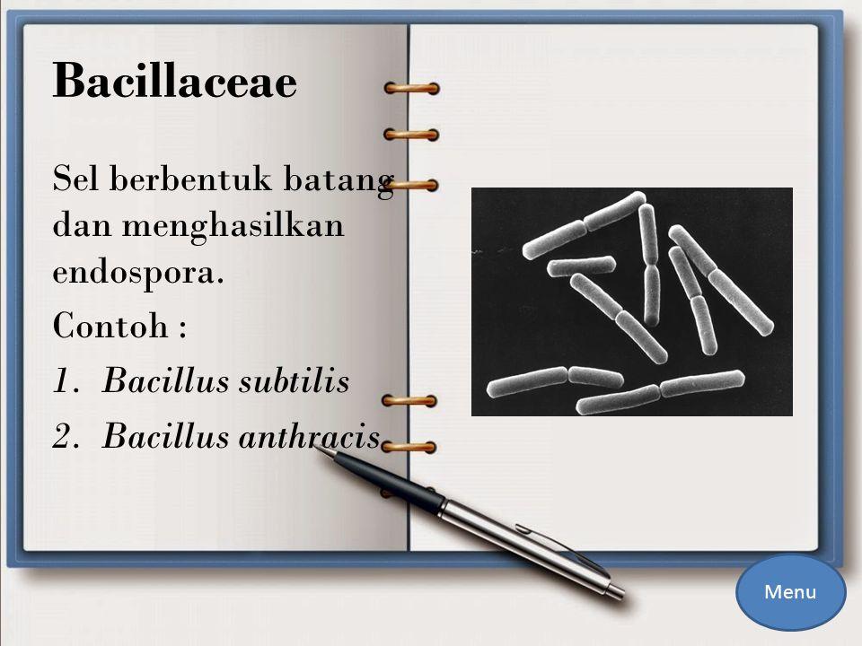 Bacillaceae Sel berbentuk batang dan menghasilkan endospora. Contoh :