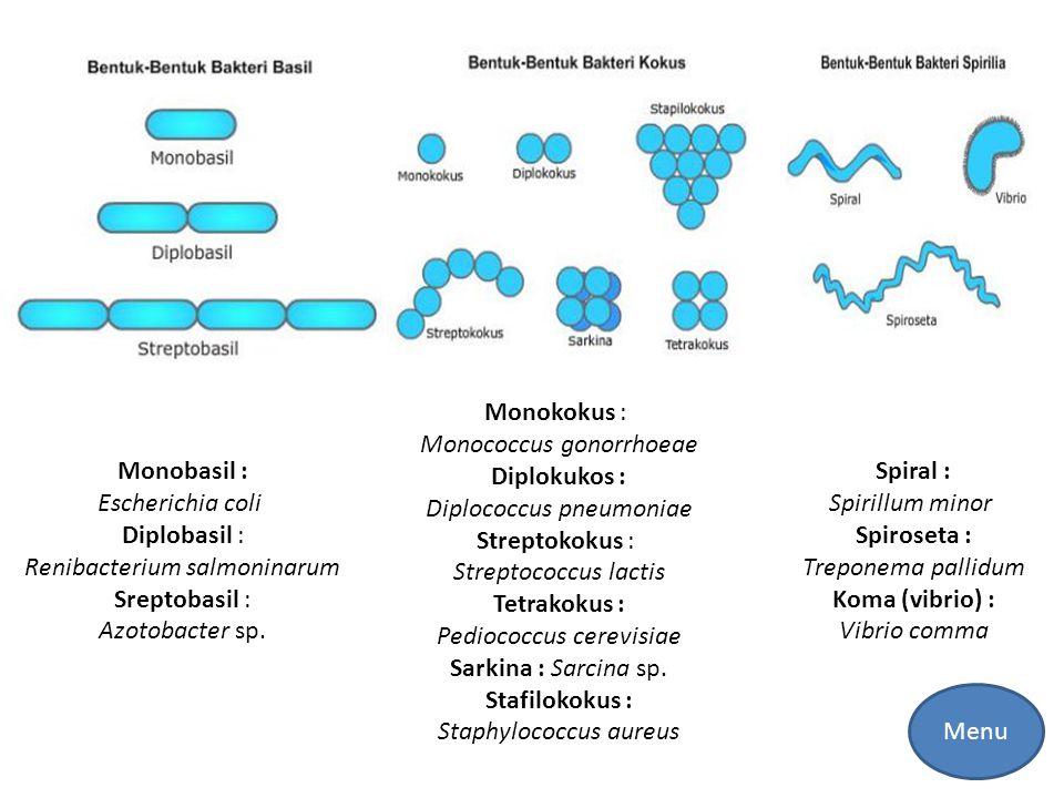 Monococcus gonorrhoeae Diplokukos : Diplococcus pneumoniae