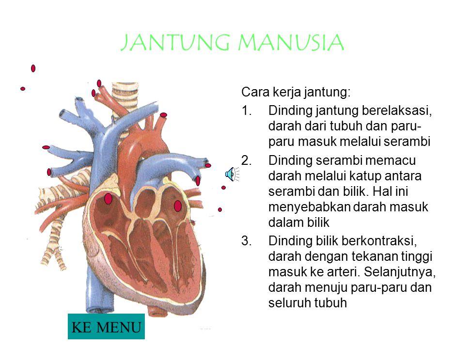 JANTUNG MANUSIA KE MENU Cara kerja jantung: