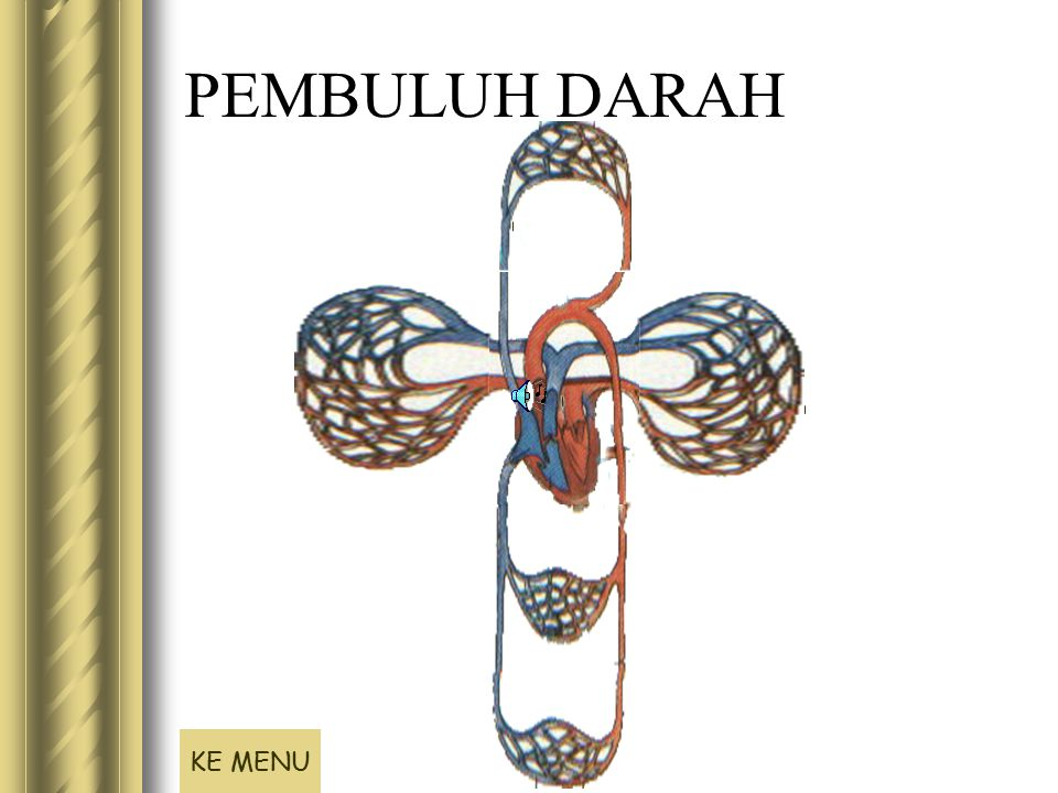PEMBULUH DARAH KE MENU