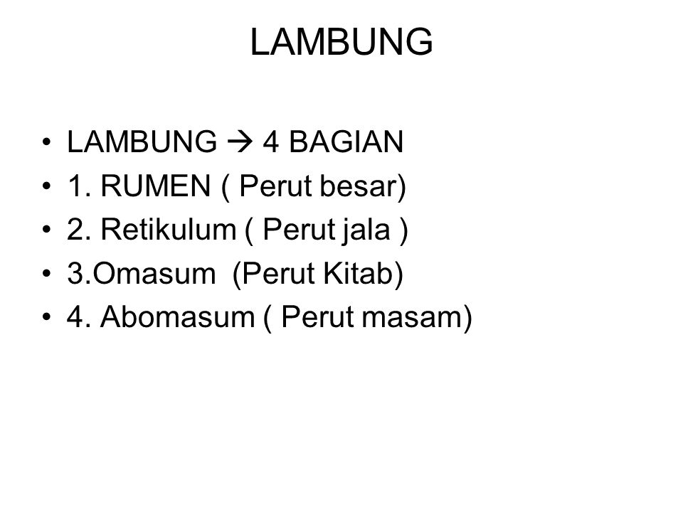 LAMBUNG LAMBUNG  4 BAGIAN 1. RUMEN ( Perut besar)