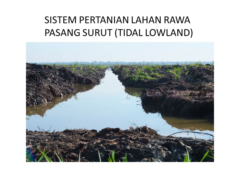 SISTEM PERTANIAN LAHAN RAWA PASANG SURUT (TIDAL LOWLAND)