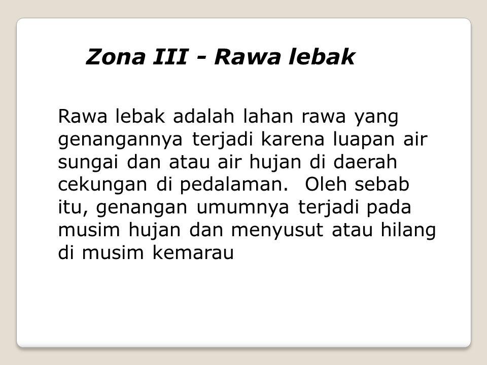 Zona III - Rawa lebak