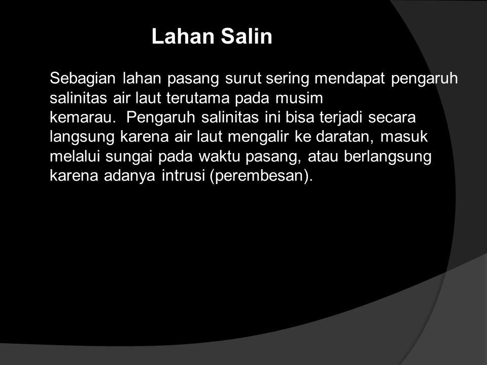 Lahan Salin