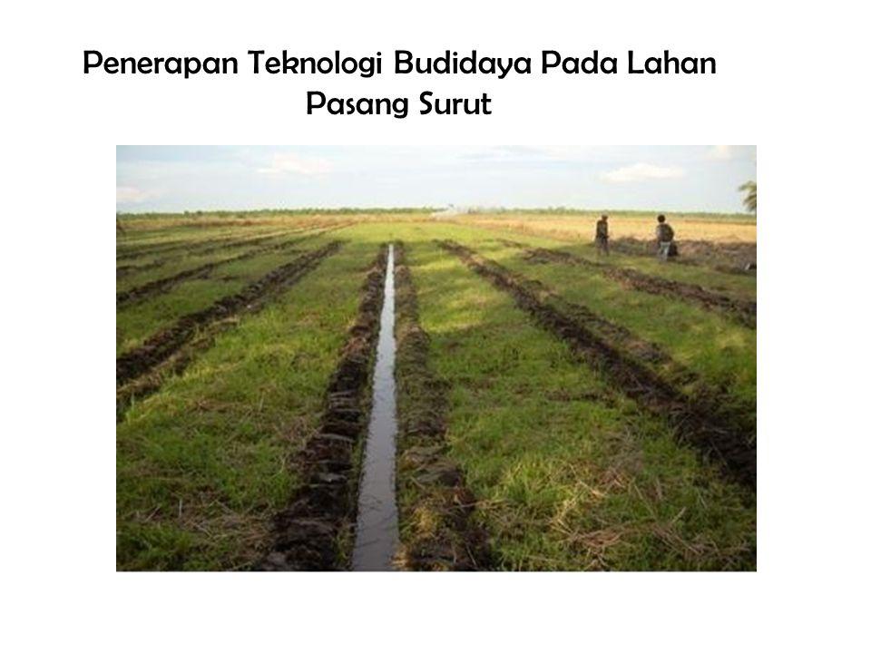 Penerapan Teknologi Budidaya Pada Lahan Pasang Surut
