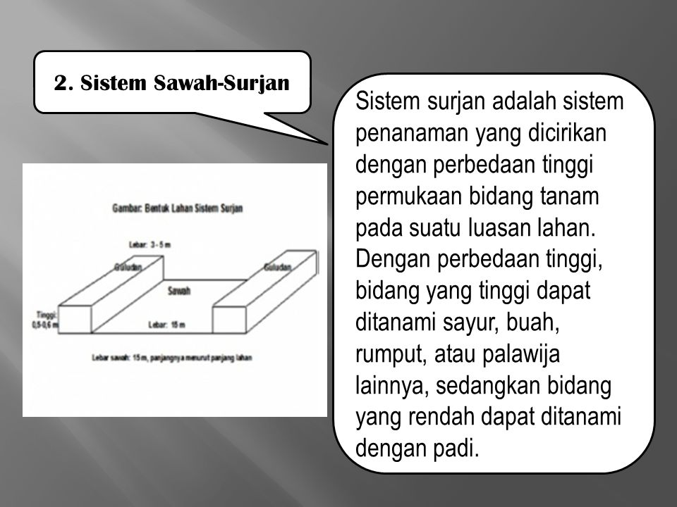 2. Sistem Sawah-Surjan