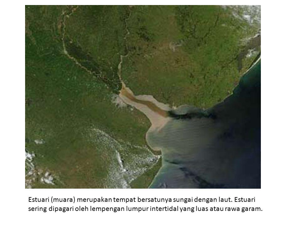 Estuari (muara) merupakan tempat bersatunya sungai dengan laut