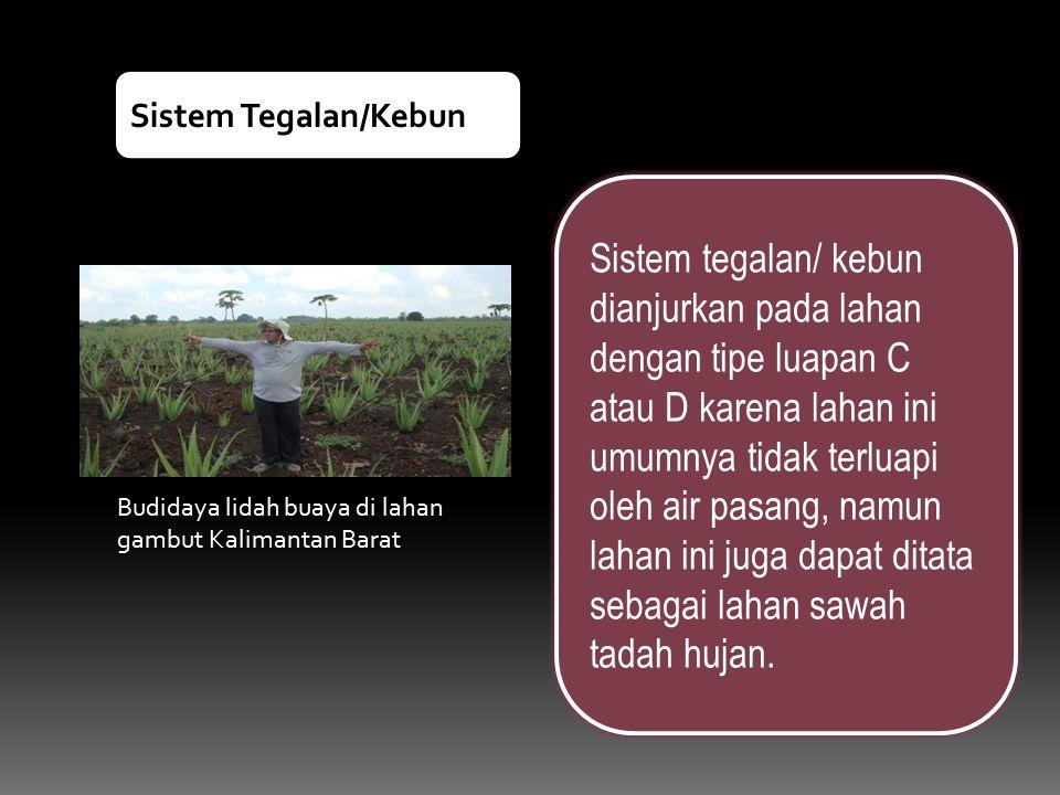 Sistem Tegalan/Kebun