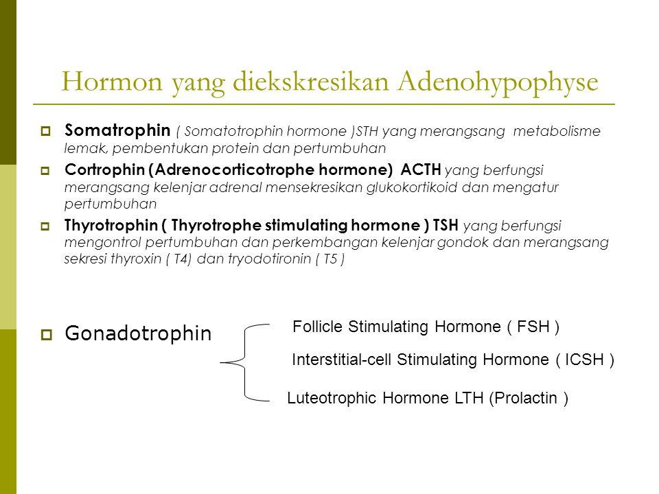 Hormon yang diekskresikan Adenohypophyse