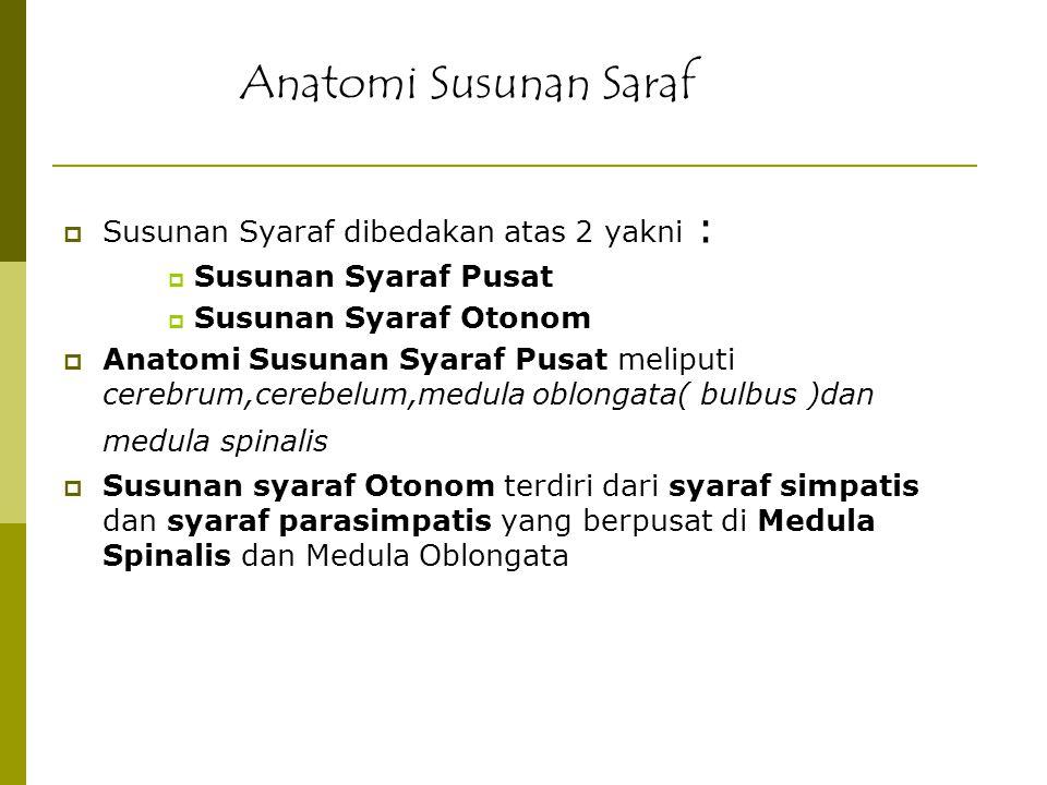 Anatomi Susunan Saraf Susunan Syaraf dibedakan atas 2 yakni :