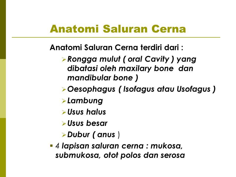 Anatomi Saluran Cerna Anatomi Saluran Cerna terdiri dari :