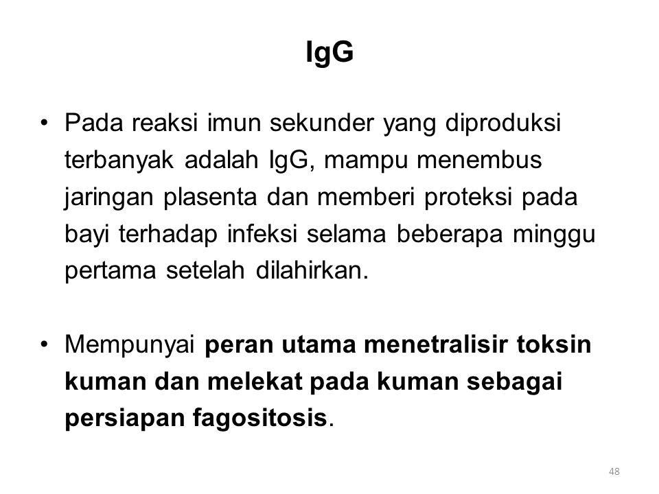 IgG Pada reaksi imun sekunder yang diproduksi