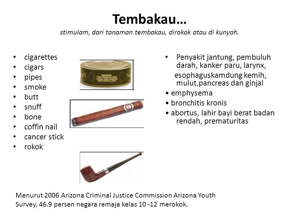 Tembakau… stimulam, dari tanaman tembakau, dirokok atau di kunyah.