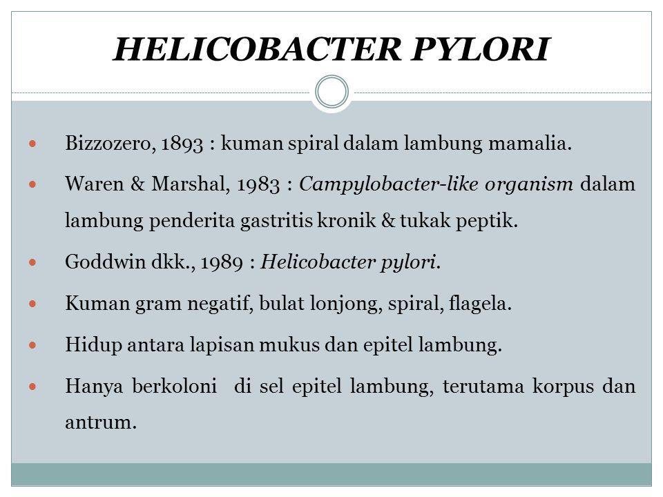 HELICOBACTER PYLORI Bizzozero, 1893 : kuman spiral dalam lambung mamalia.