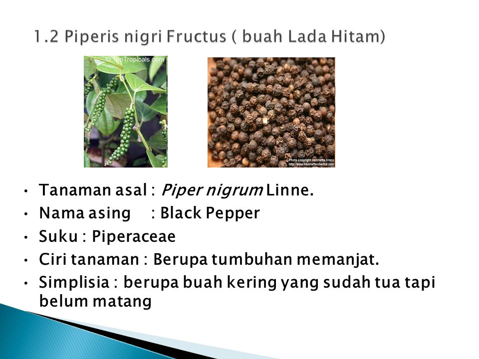 1.2 Piperis nigri Fructus ( buah Lada Hitam)