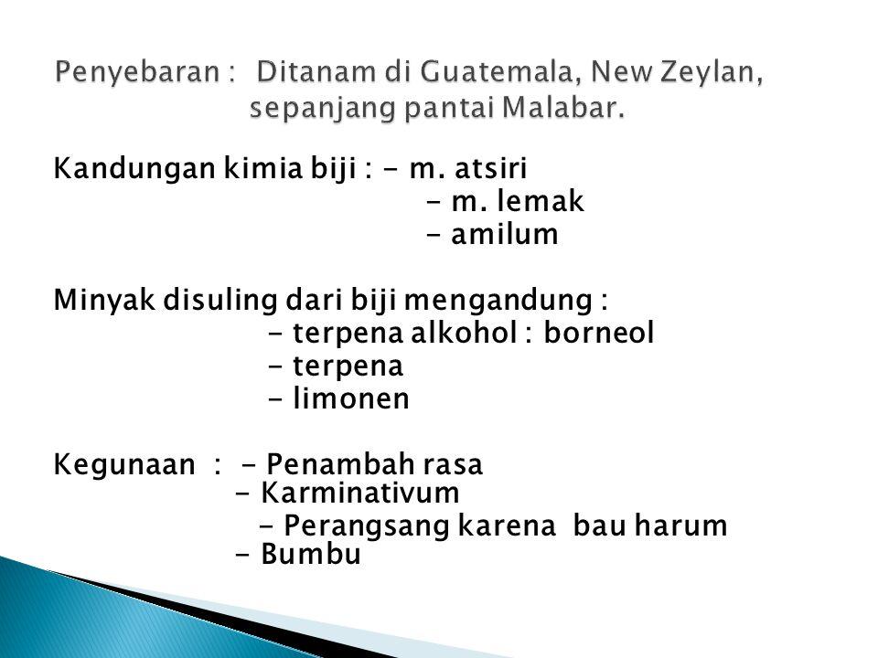 Penyebaran : Ditanam di Guatemala, New Zeylan, sepanjang pantai Malabar.