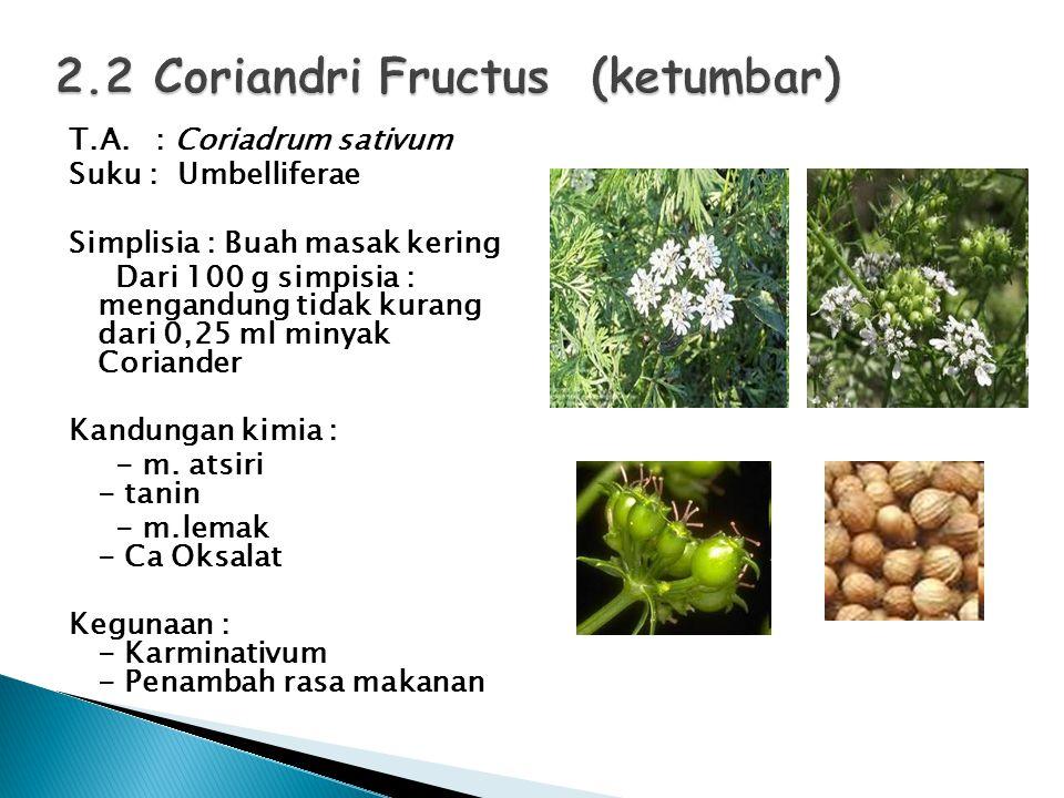 2.2 Coriandri Fructus (ketumbar)
