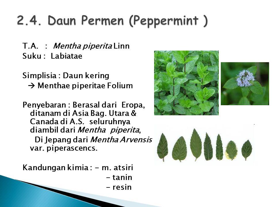 2.4. Daun Permen (Peppermint )