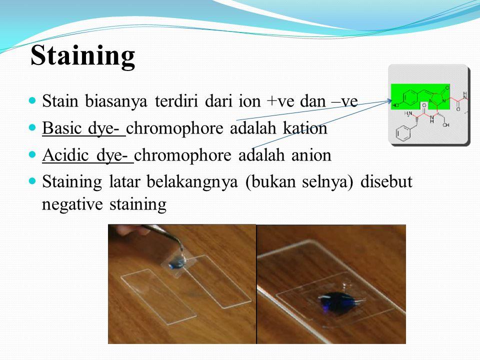 Staining Stain biasanya terdiri dari ion +ve dan –ve