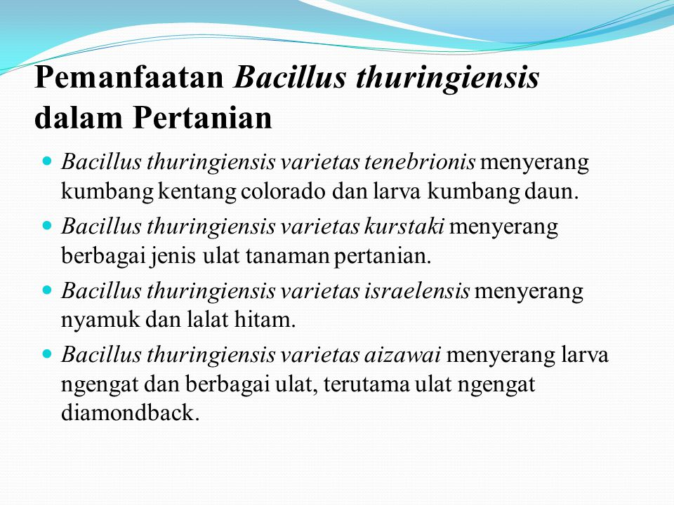 Pemanfaatan Bacillus thuringiensis dalam Pertanian