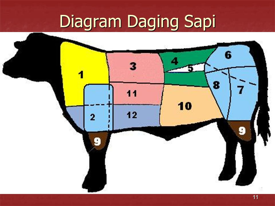 Diagram Daging Sapi