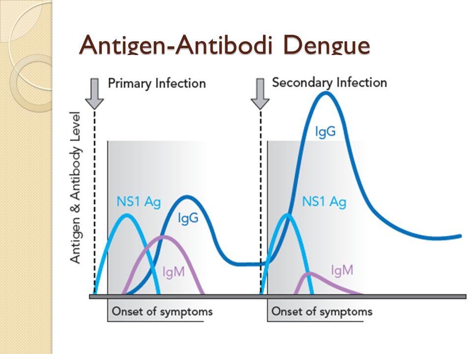 Antigen-Antibodi Dengue