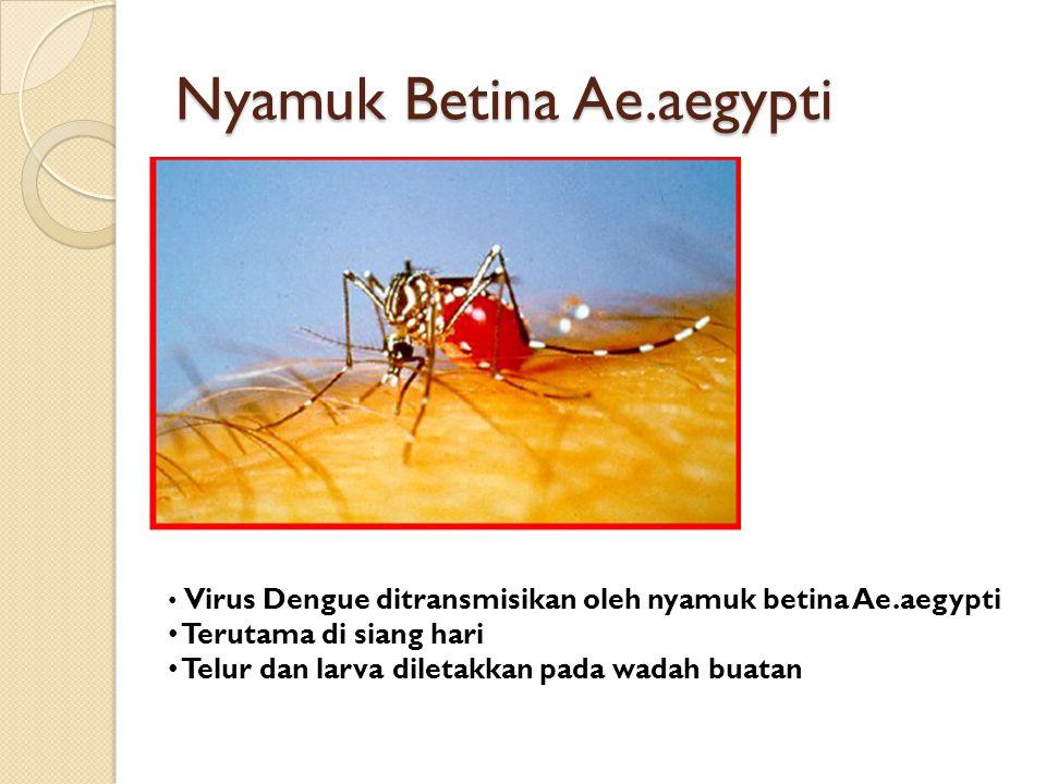 Nyamuk Betina Ae.aegypti