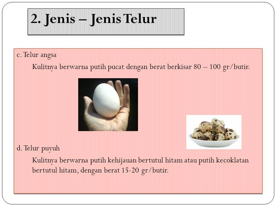 2. Jenis – Jenis Telur c. Telur angsa