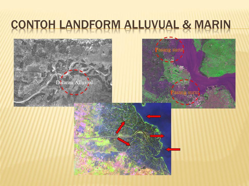Contoh Landform Alluvual & Marin