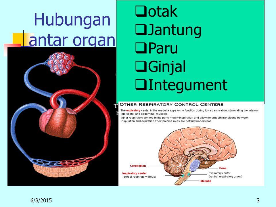 otak Jantung Paru Ginjal Integument Hubungan antar organ m 4/16/2017