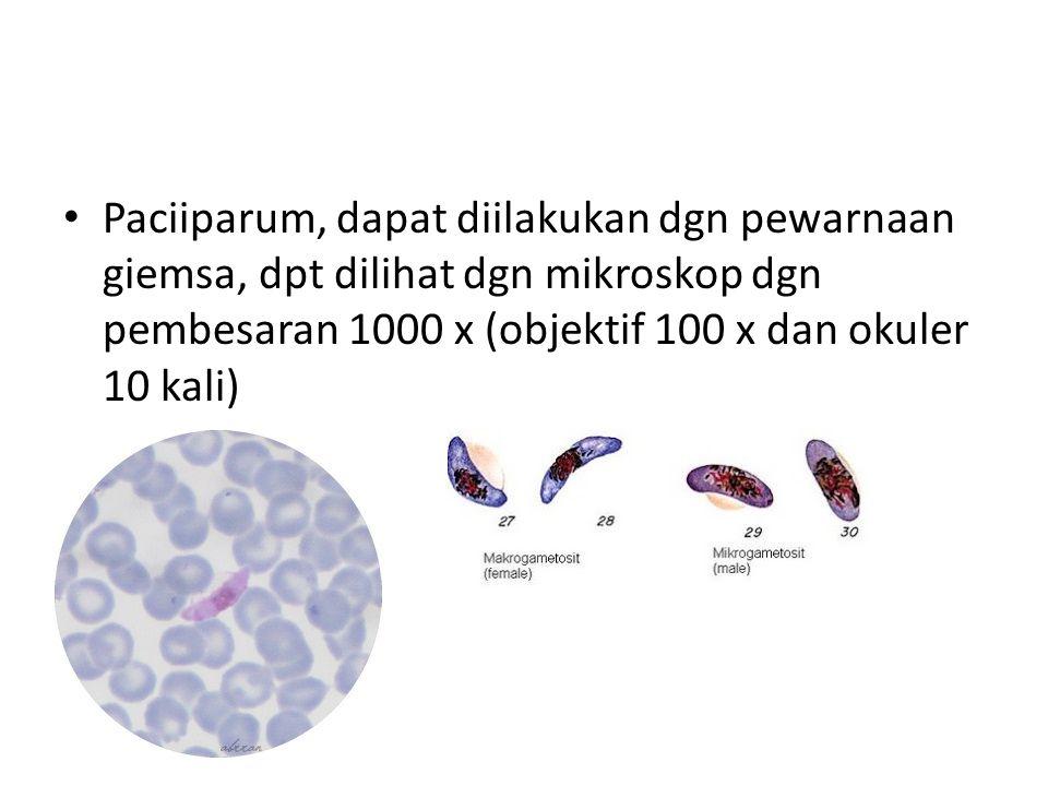 Paciiparum, dapat diilakukan dgn pewarnaan giemsa, dpt dilihat dgn mikroskop dgn pembesaran 1000 x (objektif 100 x dan okuler 10 kali)