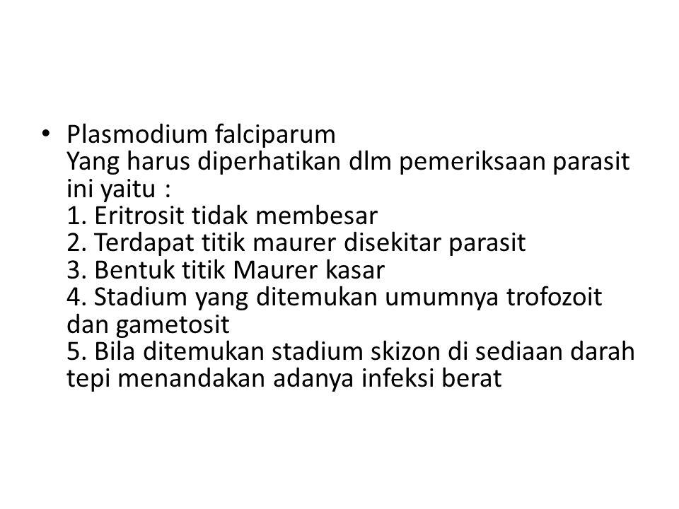 Plasmodium falciparum Yang harus diperhatikan dlm pemeriksaan parasit ini yaitu : 1.