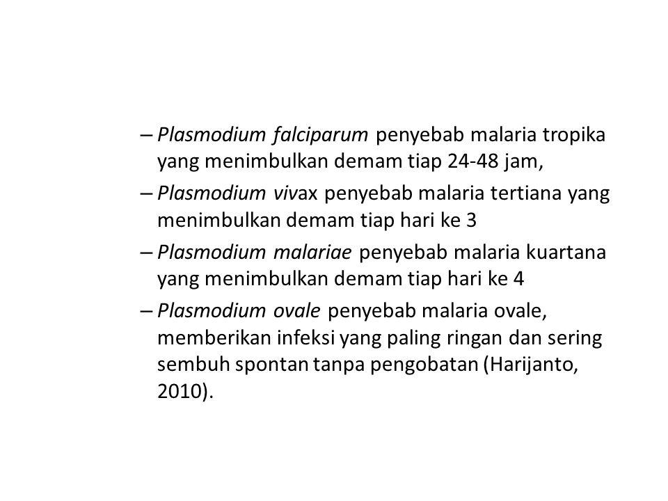 Plasmodium falciparum penyebab malaria tropika yang menimbulkan demam tiap 24-48 jam,