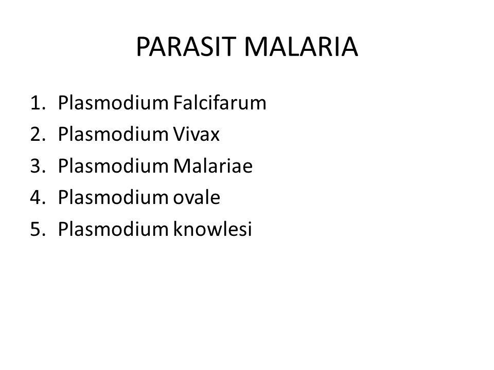 PARASIT MALARIA Plasmodium Falcifarum Plasmodium Vivax