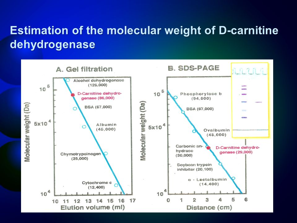 Estimation of the molecular weight of D-carnitine dehydrogenase