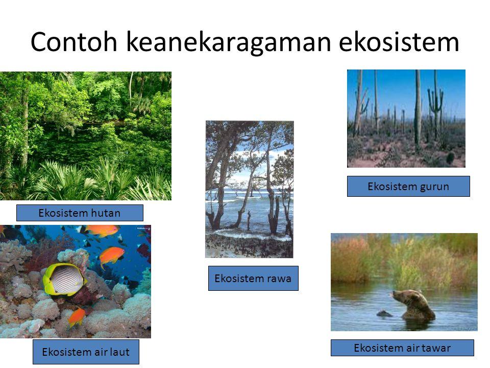 Contoh keanekaragaman ekosistem