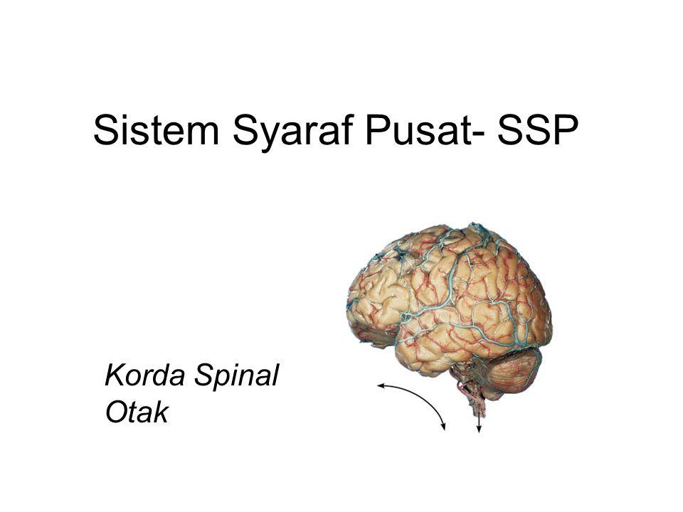 Sistem Syaraf Pusat- SSP