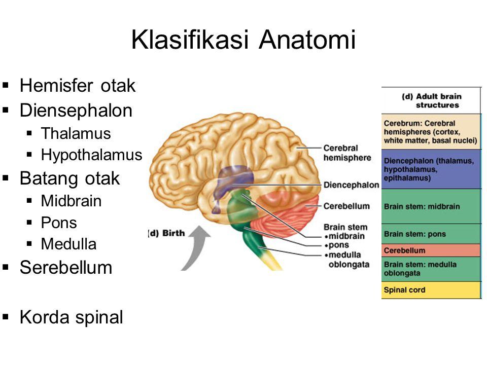 Klasifikasi Anatomi Hemisfer otak Diensephalon Batang otak Serebellum