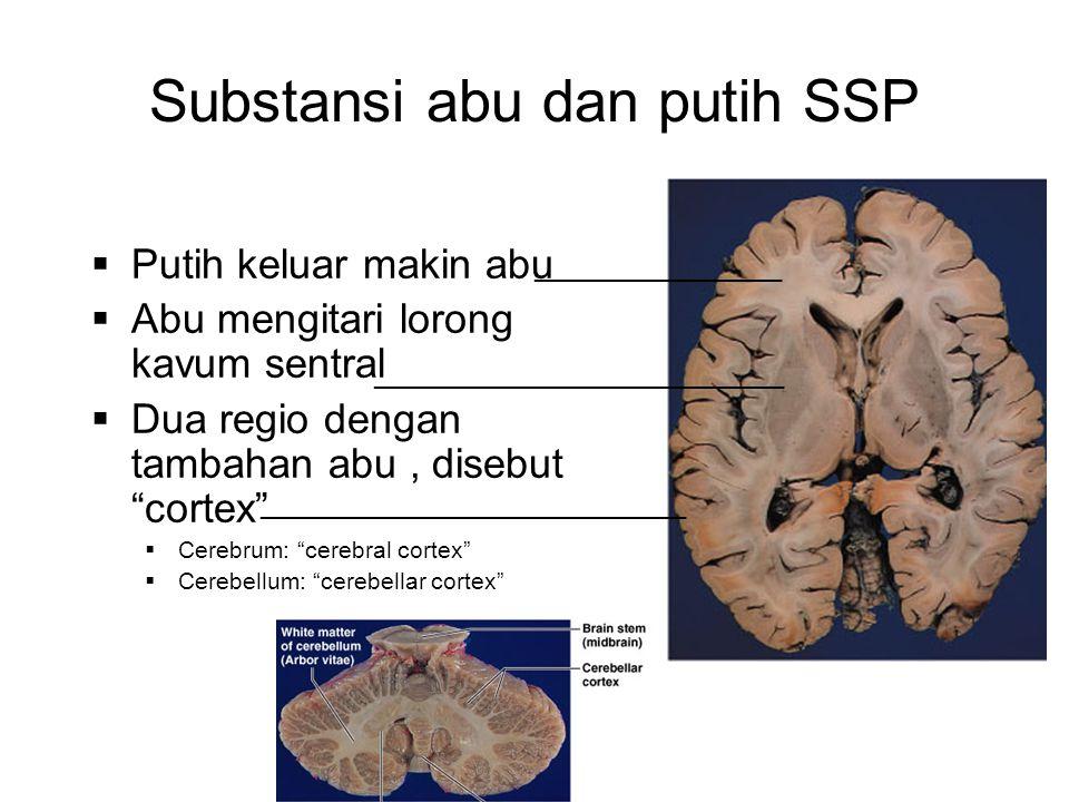 Substansi abu dan putih SSP