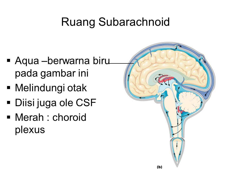 Ruang Subarachnoid Aqua –berwarna biru pada gambar ini Melindungi otak
